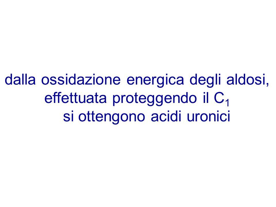 dalla ossidazione energica degli aldosi, effettuata proteggendo il C1