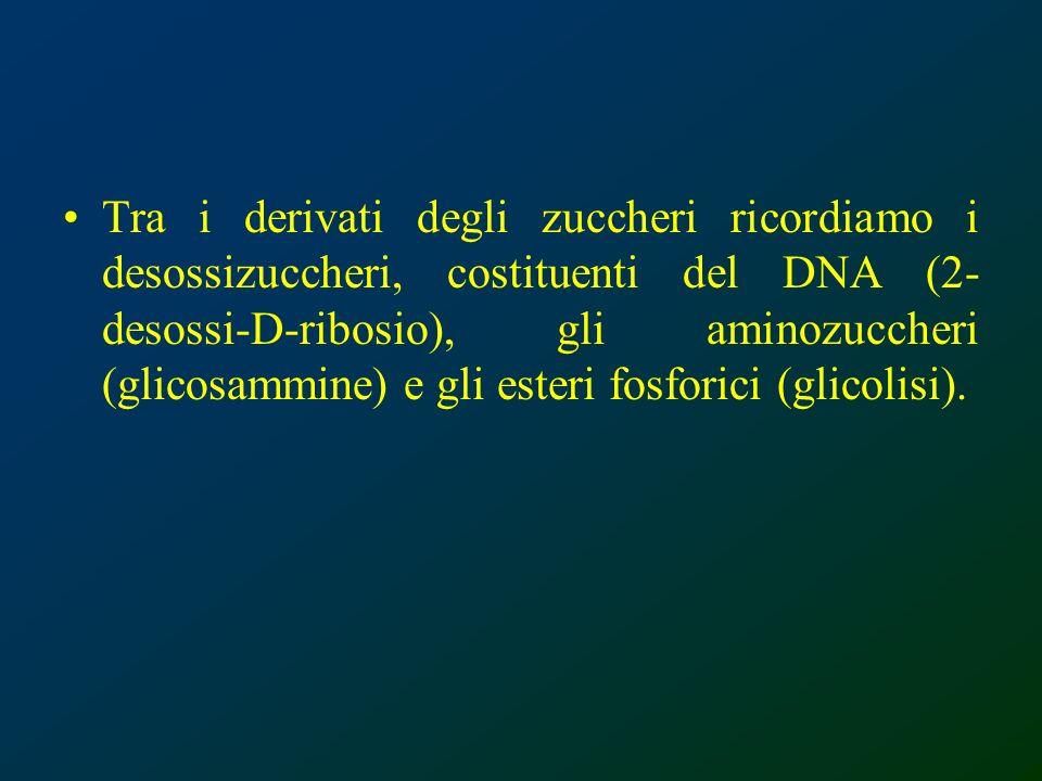 Tra i derivati degli zuccheri ricordiamo i desossizuccheri, costituenti del DNA (2-desossi-D-ribosio), gli aminozuccheri (glicosammine) e gli esteri fosforici (glicolisi).