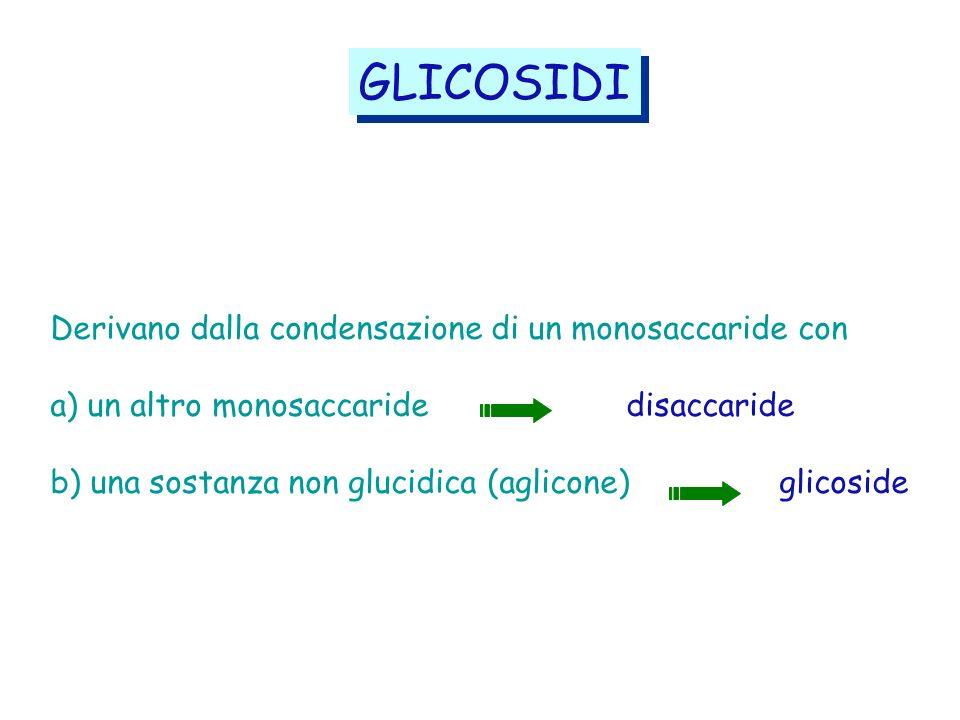 GLICOSIDI Derivano dalla condensazione di un monosaccaride con