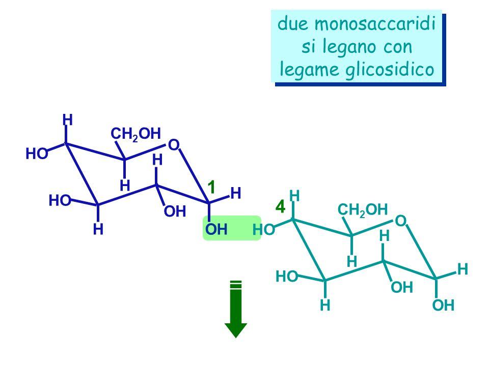 due monosaccaridi si legano con legame glicosidico 1 4 H H CH2OH O H