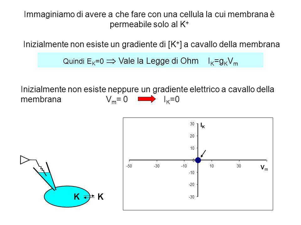 Quindi EK=0  Vale la Legge di Ohm IK=gKVm