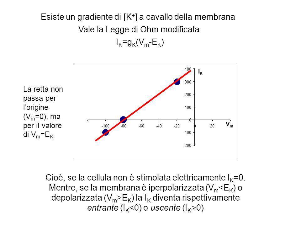 Cioè, se la cellula non è stimolata elettricamente IK=0.