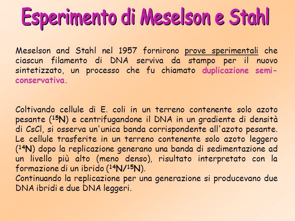 Esperimento di Meselson e Stahl