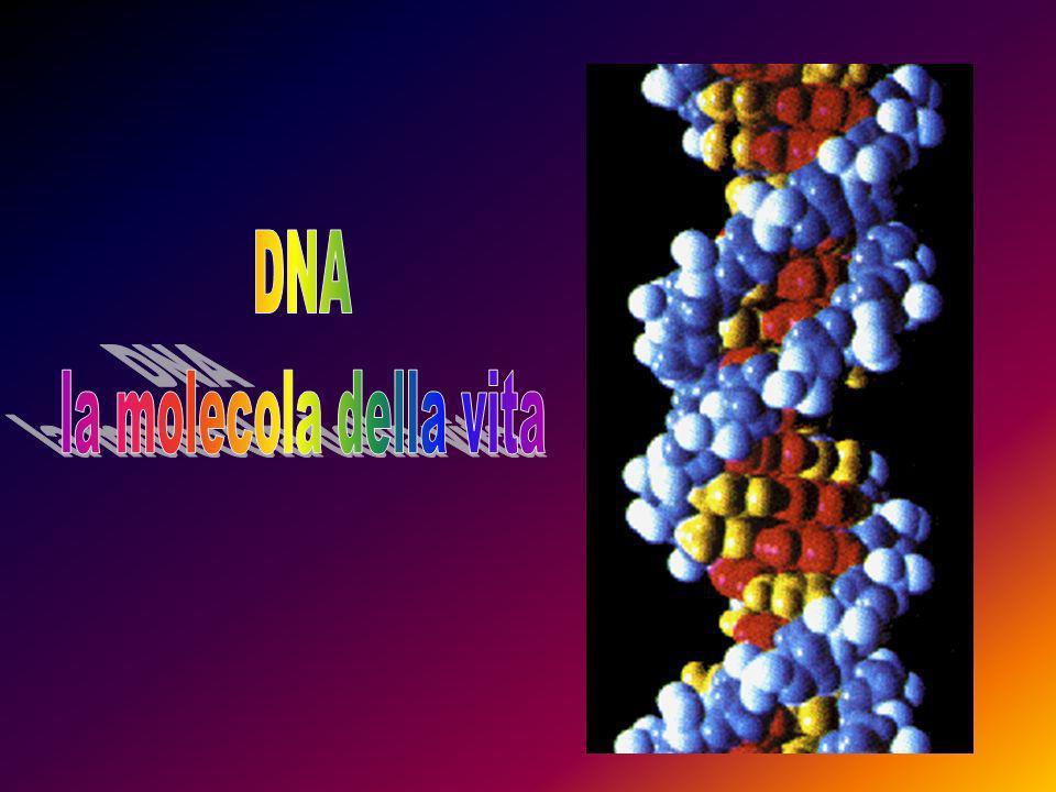 DNA la molecola della vita