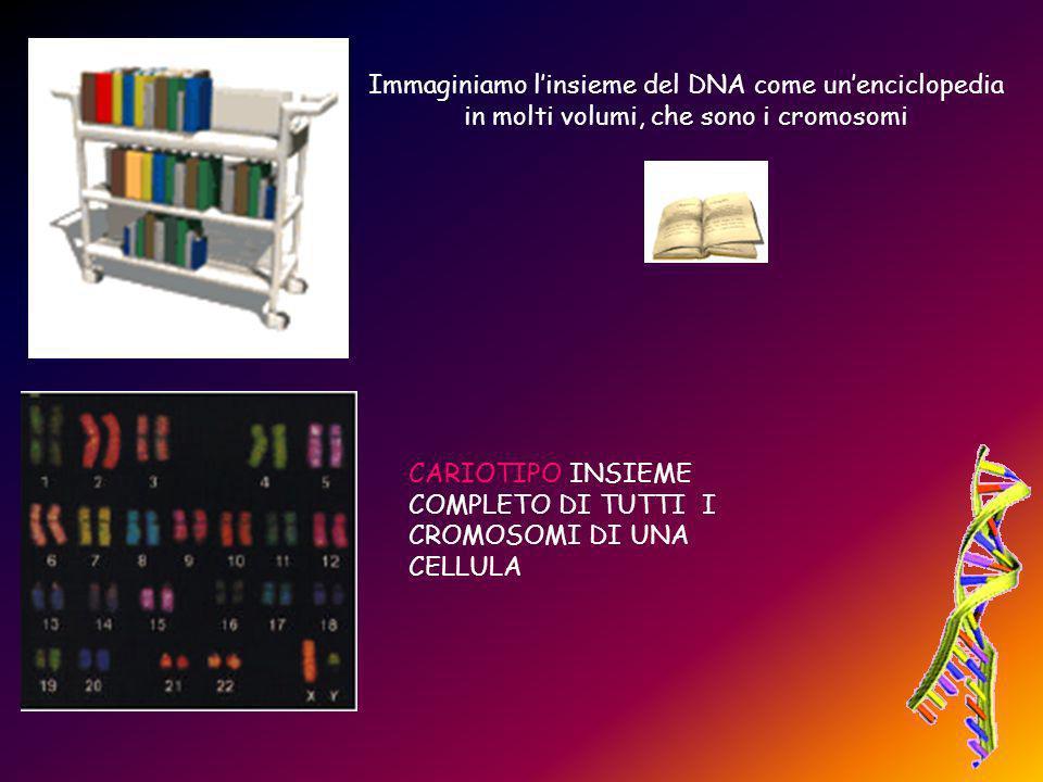 Immaginiamo l'insieme del DNA come un'enciclopedia in molti volumi, che sono i cromosomi