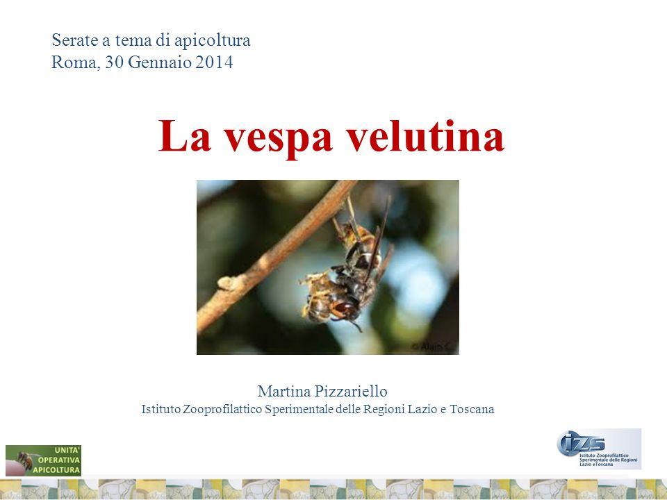 La vespa velutina Serate a tema di apicoltura Roma, 30 Gennaio 2014