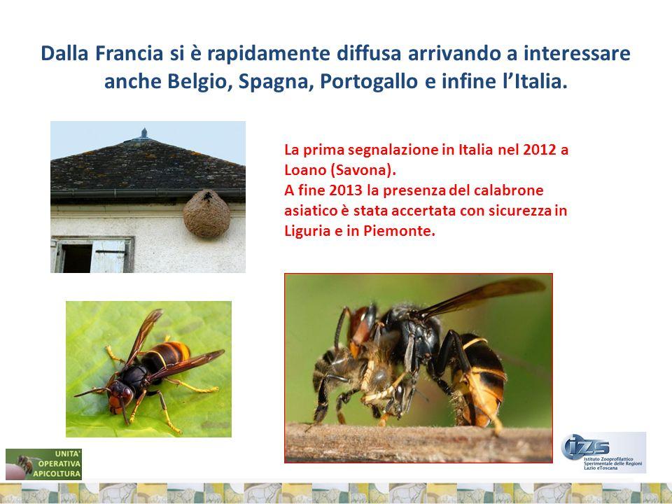 Dalla Francia si è rapidamente diffusa arrivando a interessare anche Belgio, Spagna, Portogallo e infine l'Italia.