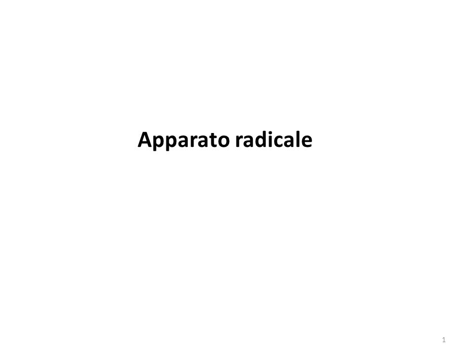 Apparato radicale