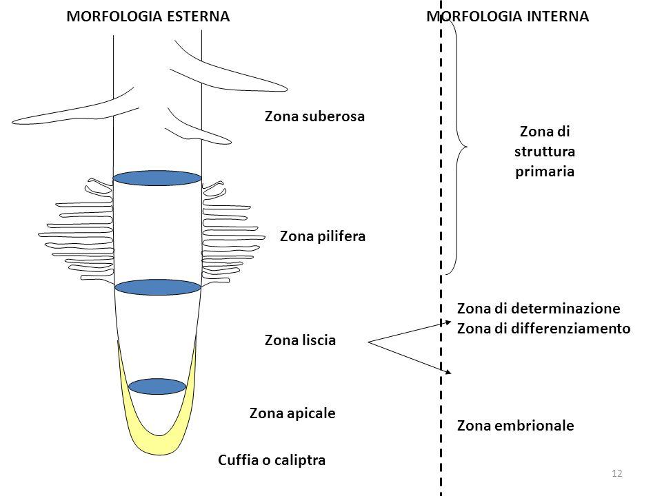 Zona di struttura primaria