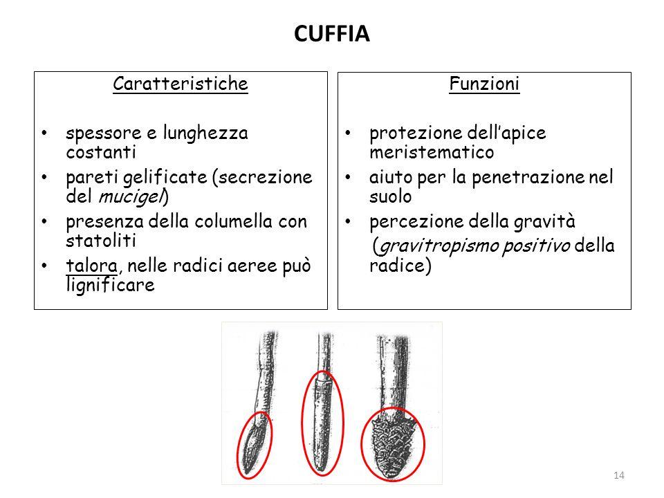 CUFFIA Caratteristiche Funzioni spessore e lunghezza costanti