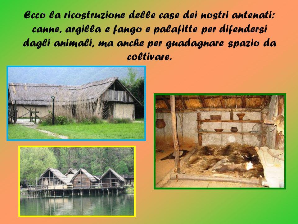 Ecco la ricostruzione delle case dei nostri antenati: canne, argilla e fango e palafitte per difendersi dagli animali, ma anche per guadagnare spazio da coltivare.