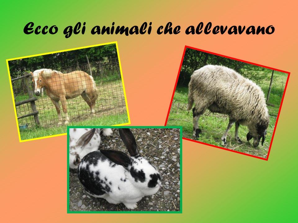 Ecco gli animali che allevavano