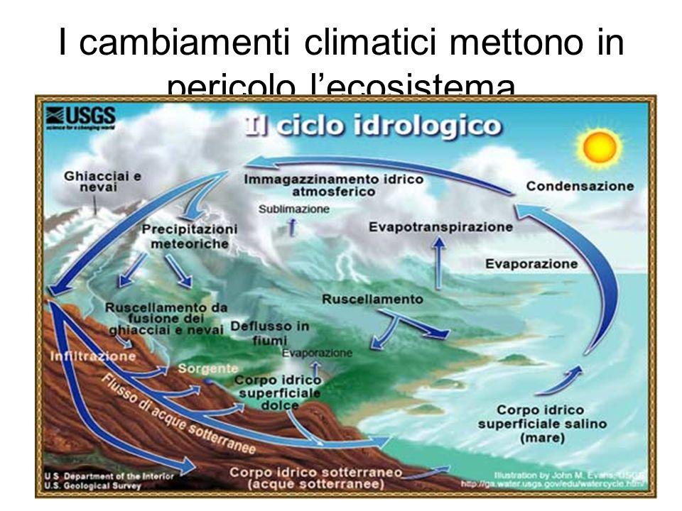 I cambiamenti climatici mettono in pericolo l'ecosistema
