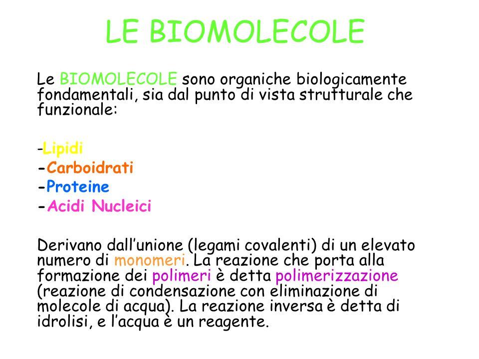 LE BIOMOLECOLE Le BIOMOLECOLE sono organiche biologicamente fondamentali, sia dal punto di vista strutturale che funzionale: