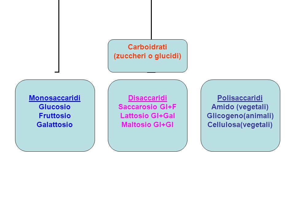Carboidrati (zuccheri o glucidi) Monosaccaridi. Glucosio. Fruttosio. Galattosio. Disaccaridi. Saccarosio Gl+F.