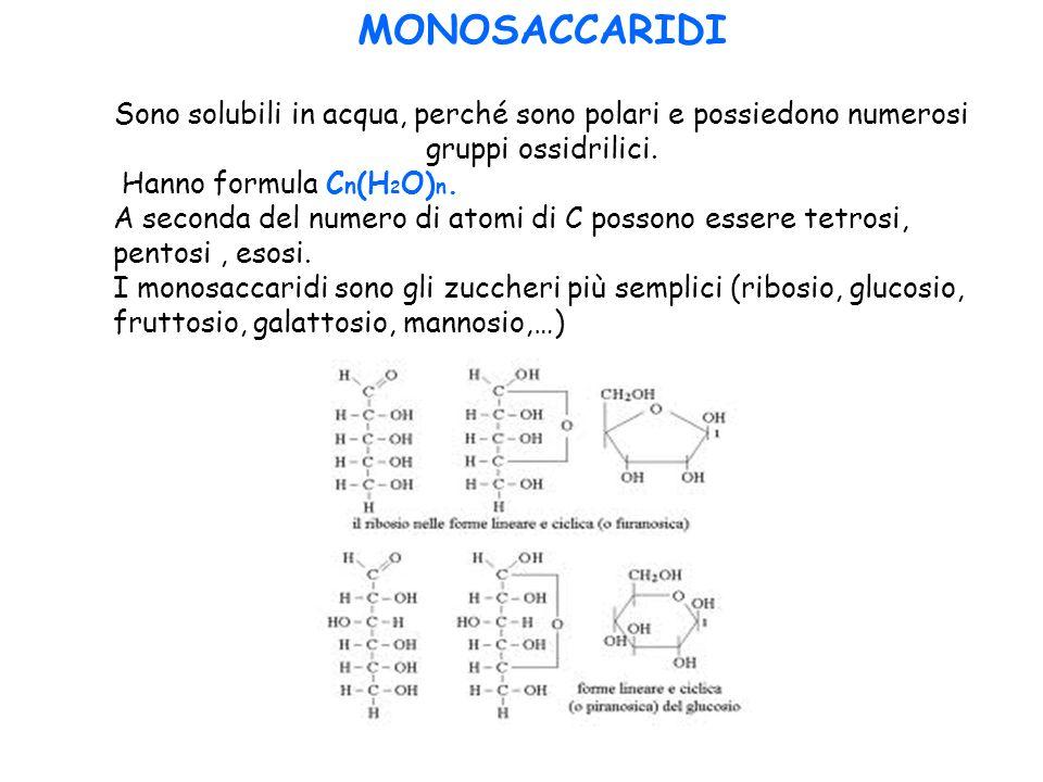 MONOSACCARIDI Sono solubili in acqua, perché sono polari e possiedono numerosi gruppi ossidrilici. Hanno formula Cn(H2O)n.