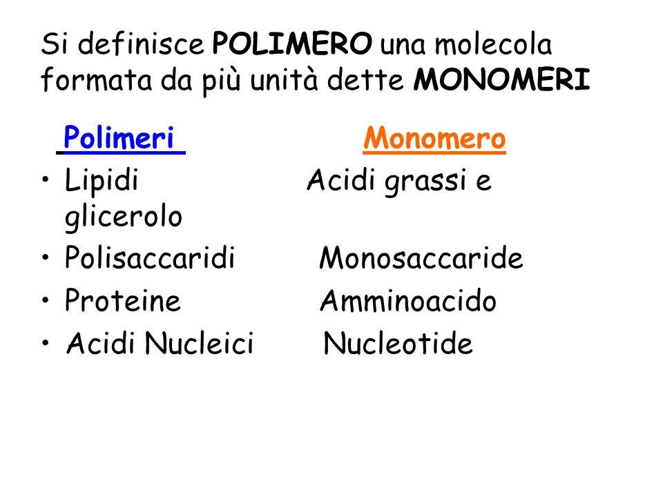 Si definisce POLIMERO una molecola formata da più unità dette MONOMERI