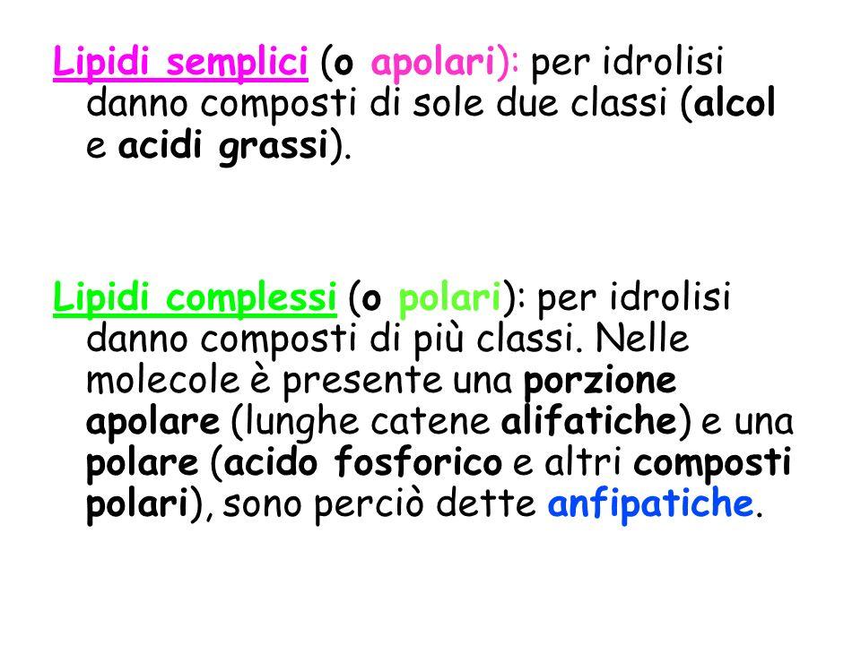 Lipidi semplici (o apolari): per idrolisi danno composti di sole due classi (alcol e acidi grassi).