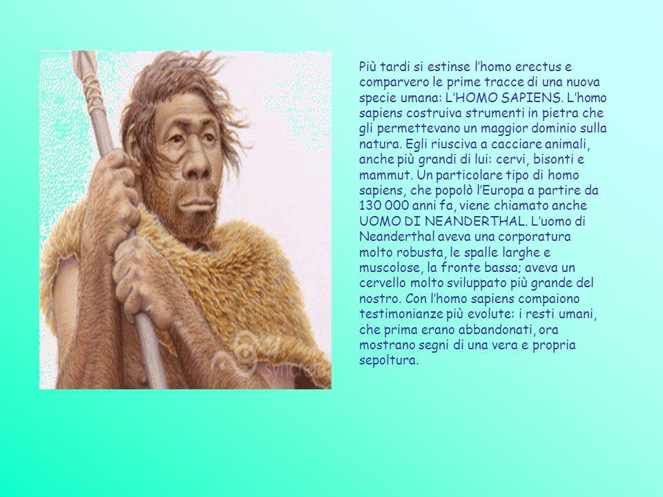 Più tardi si estinse l'homo erectus e comparvero le prime tracce di una nuova specie umana: L'HOMO SAPIENS.
