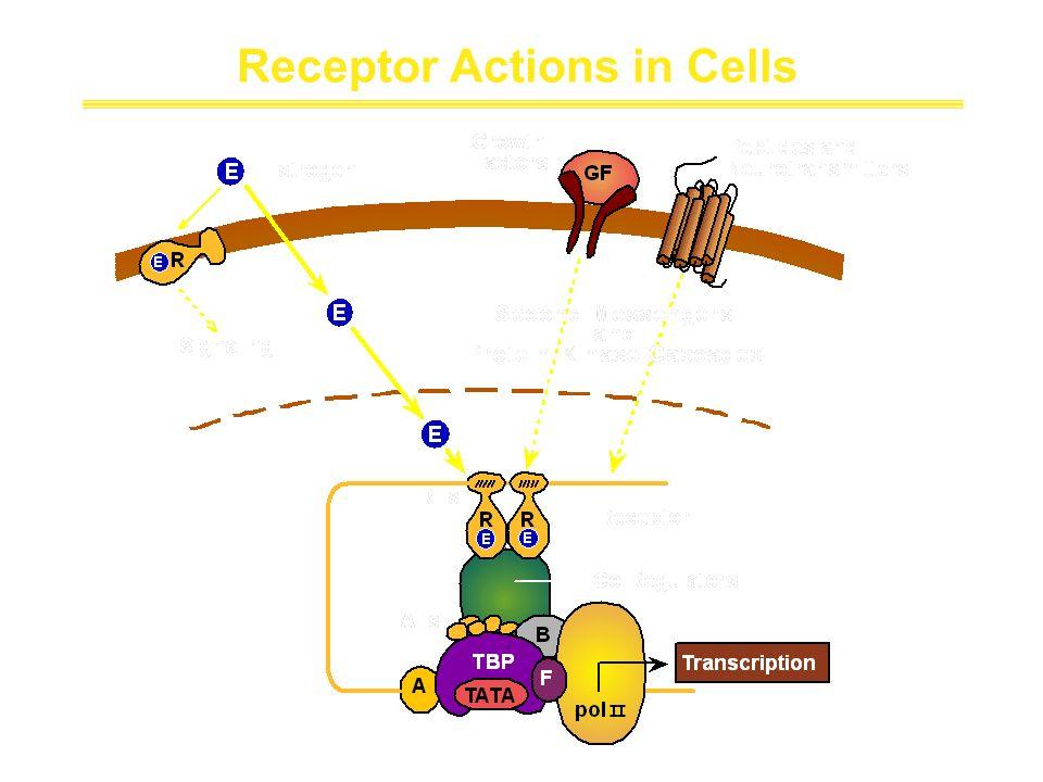Receptor Actions in Cells