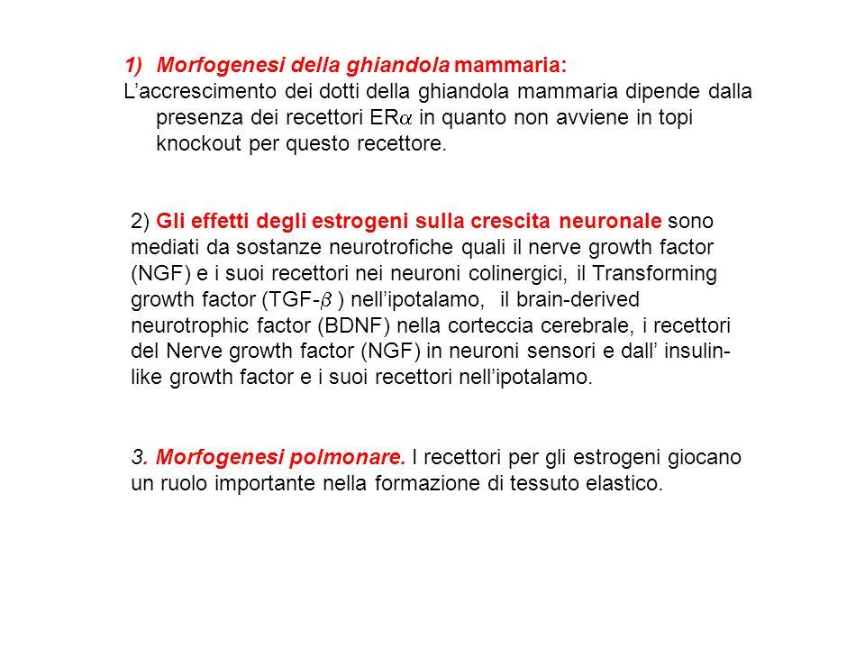 Morfogenesi della ghiandola mammaria: