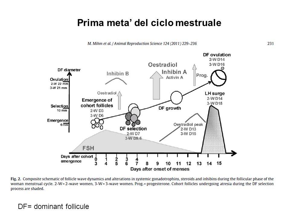 Prima meta' del ciclo mestruale