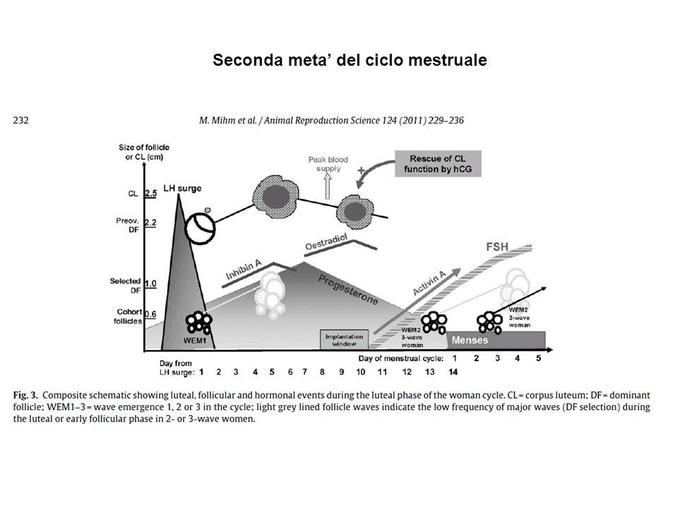 Seconda meta' del ciclo mestruale