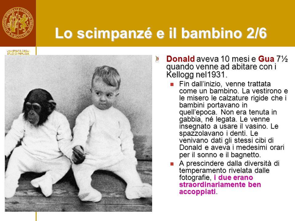 Lo scimpanzé e il bambino 2/6