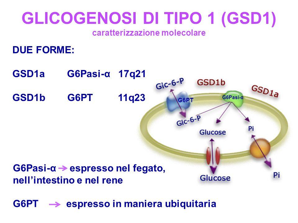 GLICOGENOSI DI TIPO 1 (GSD1) caratterizzazione molecolare