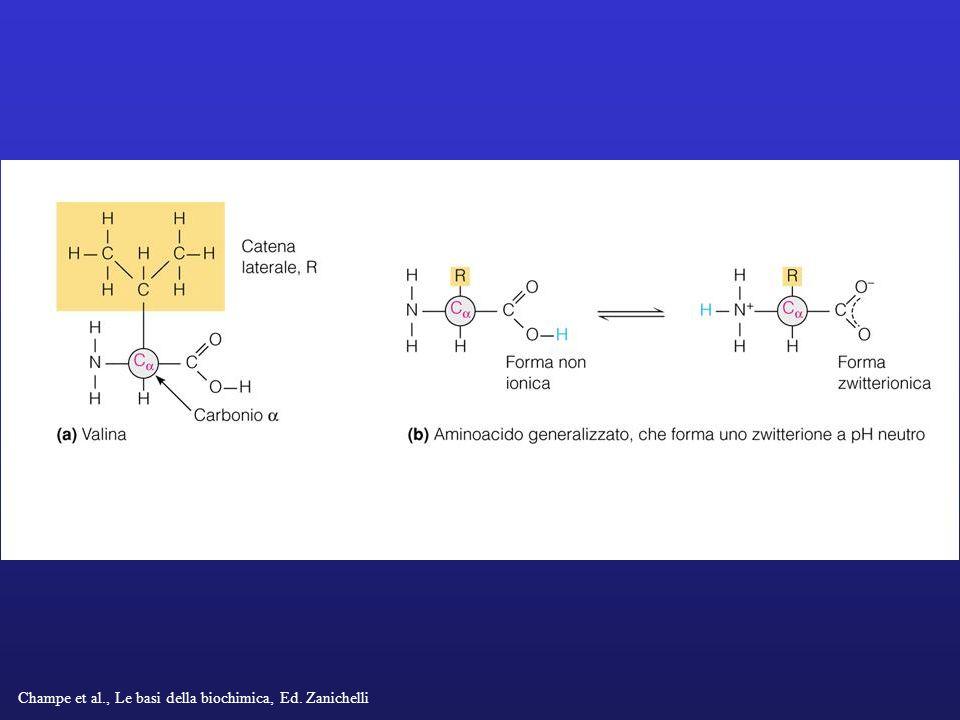Champe et al., Le basi della biochimica, Ed. Zanichelli