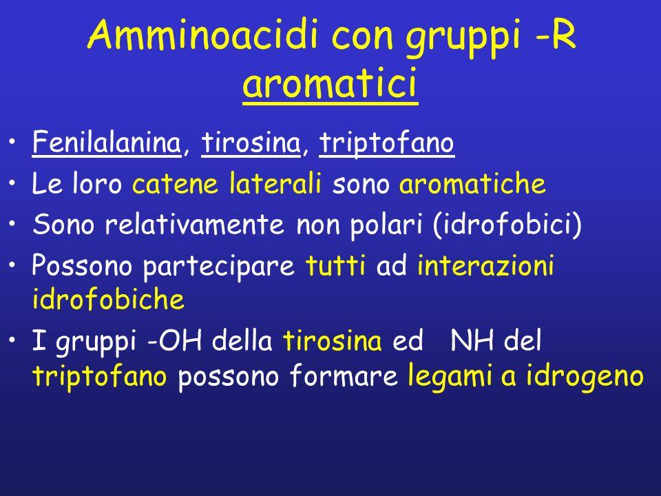 Amminoacidi con gruppi -R aromatici
