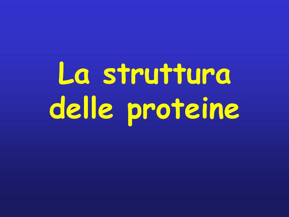 La struttura delle proteine
