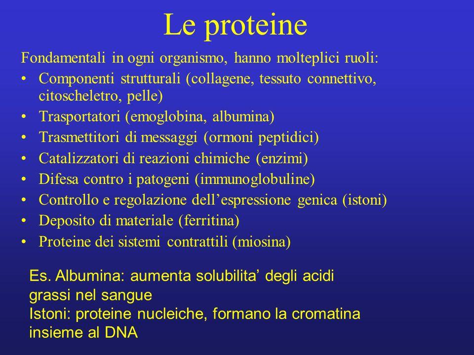 Le proteine Fondamentali in ogni organismo, hanno molteplici ruoli: