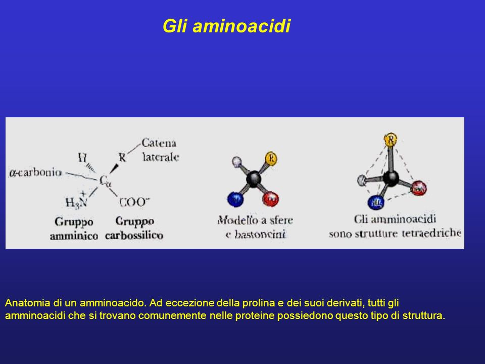 Gli aminoacidi Anatomia di un amminoacido. Ad eccezione della prolina e dei suoi derivati, tutti gli.