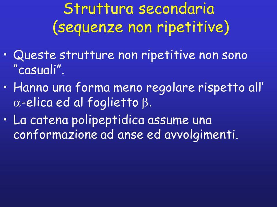 Struttura secondaria (sequenze non ripetitive)