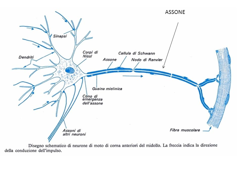ASSONE
