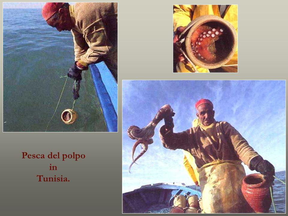 Pesca del polpo in Tunisia.