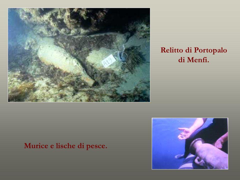 Relitto di Portopalo di Menfi. Murice e lische di pesce.