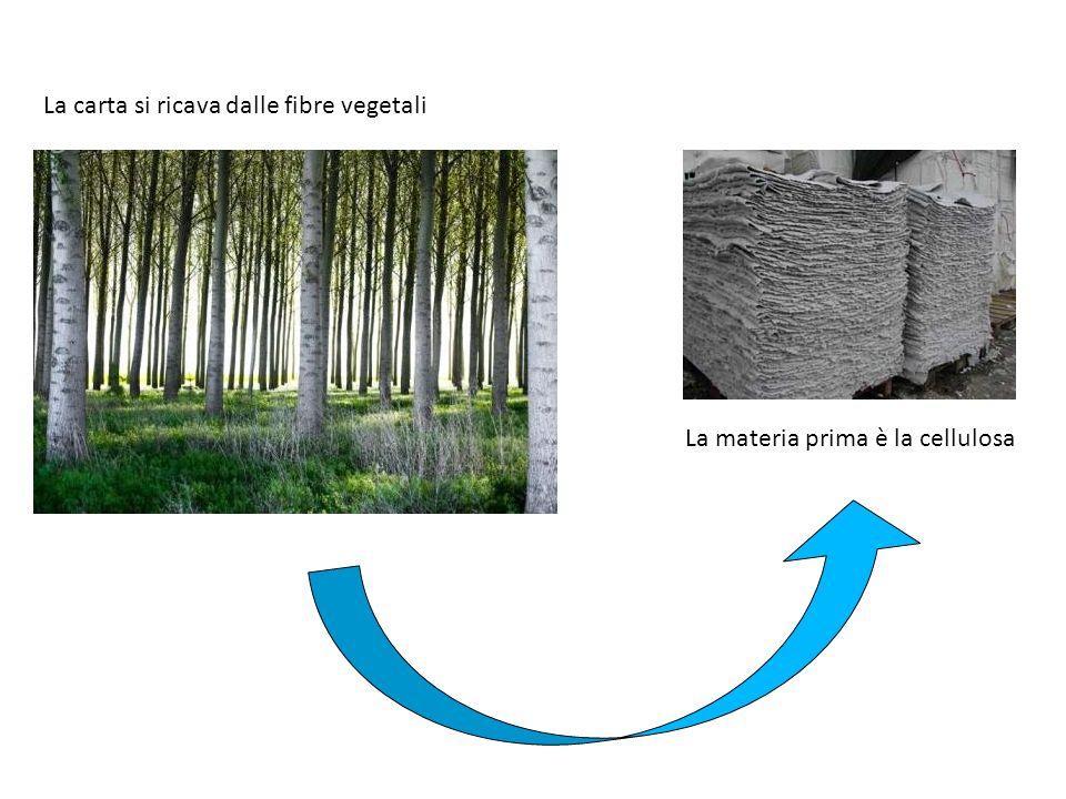La carta si ricava dalle fibre vegetali