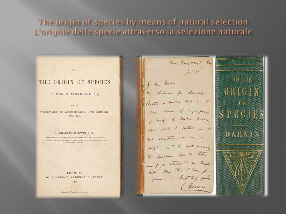 The origin of species by means of natural selection L'origine delle specie attraverso la selezione naturale