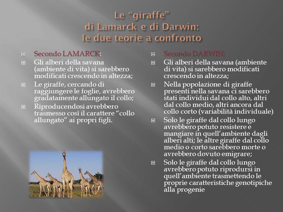 Le giraffe di Lamarck e di Darwin: le due teorie a confronto