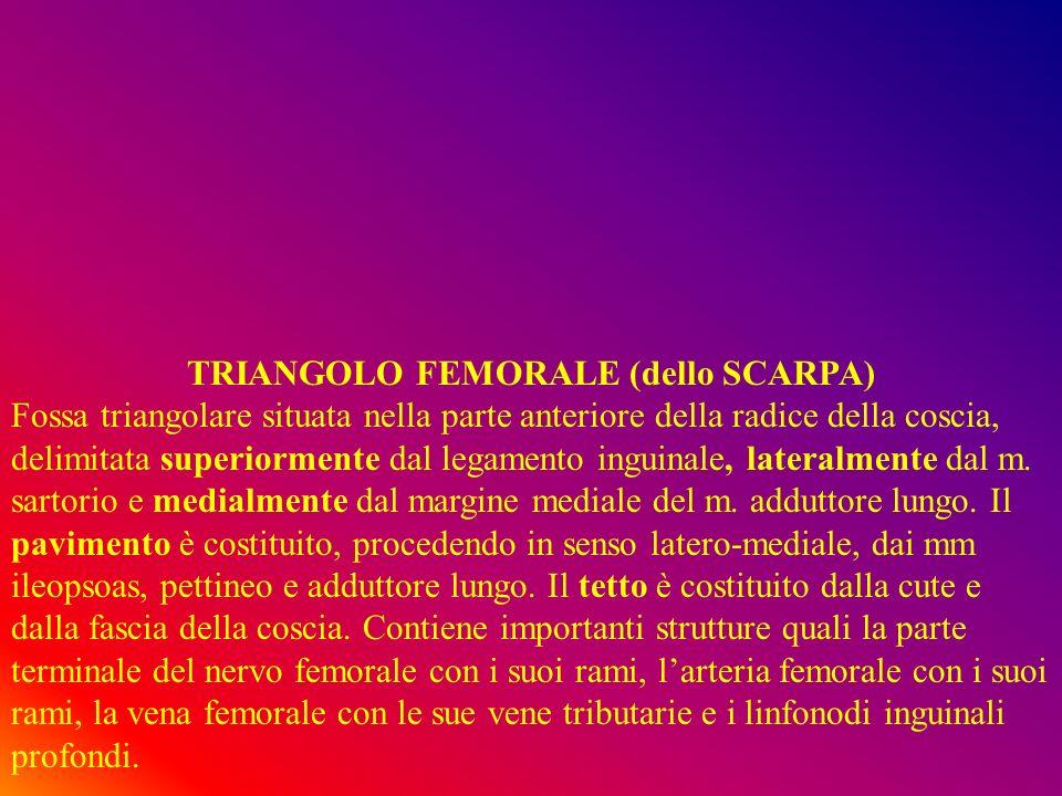 TRIANGOLO FEMORALE (dello SCARPA)