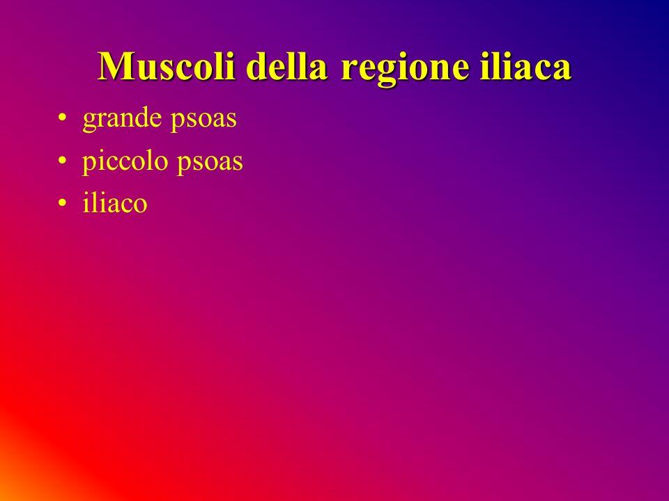 Muscoli della regione iliaca