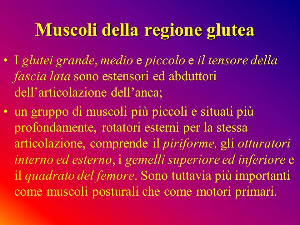 Muscoli della regione glutea
