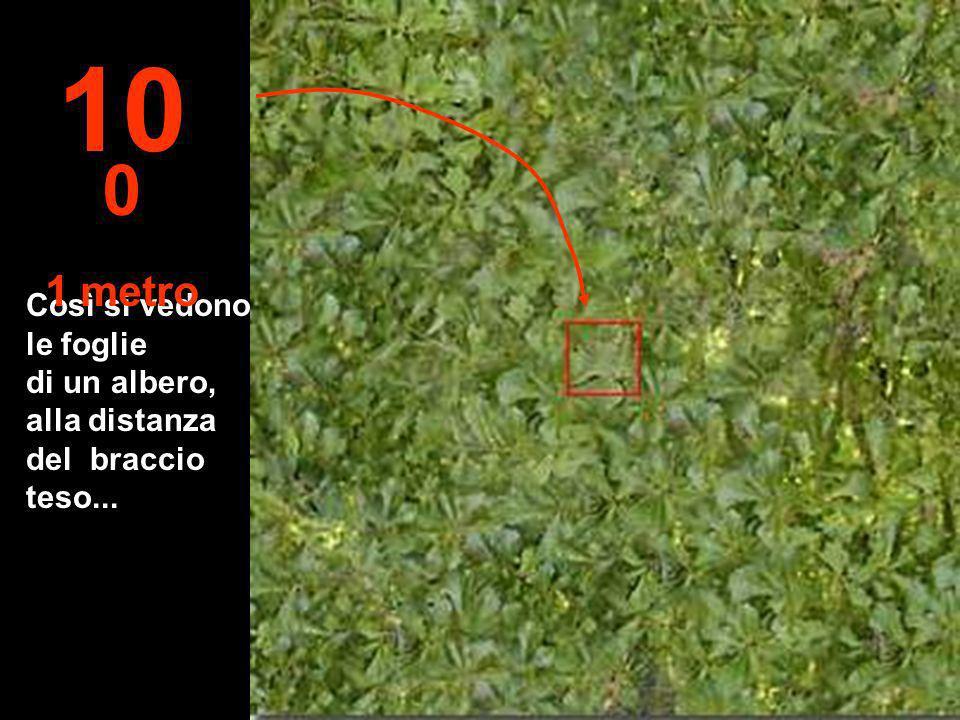 100 1 metro Così si vedono le foglie di un albero, alla distanza del braccio teso...