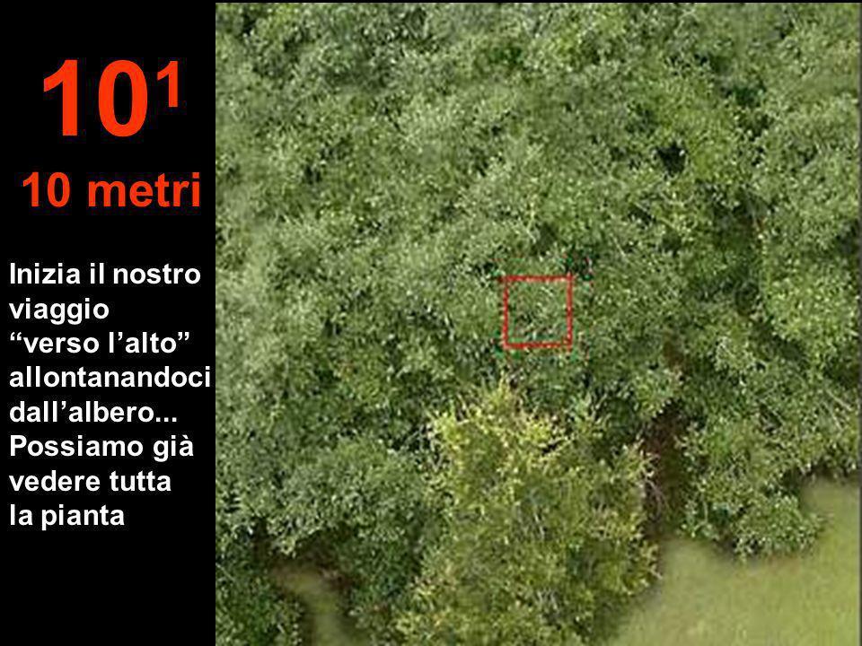 101 10 metri. Inizia il nostro viaggio verso l'alto allontanandoci dall'albero...