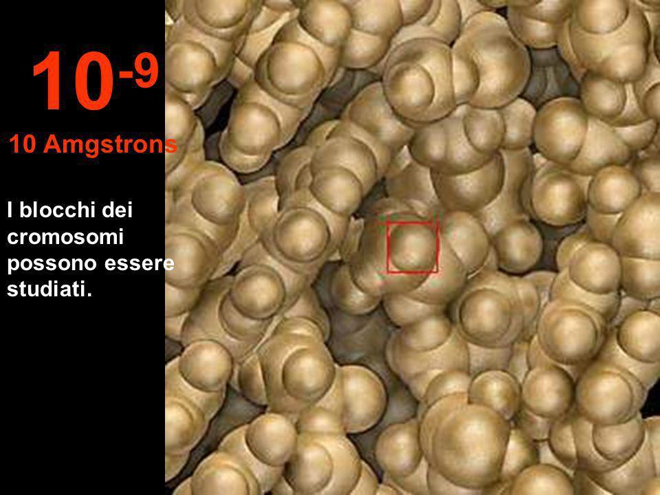 10-9 10 Amgstrons I blocchi dei cromosomi possono essere studiati.
