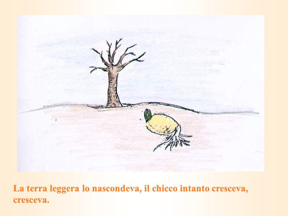 La terra leggera lo nascondeva, il chicco intanto cresceva, cresceva.