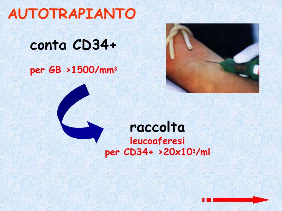 AUTOTRAPIANTO conta CD34+ raccolta
