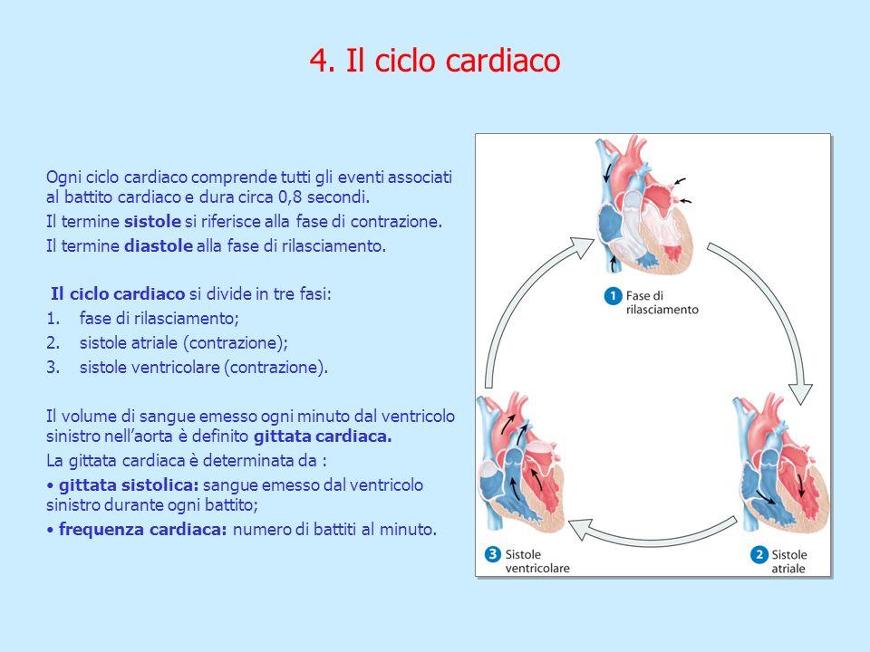 4. Il ciclo cardiaco Ogni ciclo cardiaco comprende tutti gli eventi associati al battito cardiaco e dura circa 0,8 secondi.